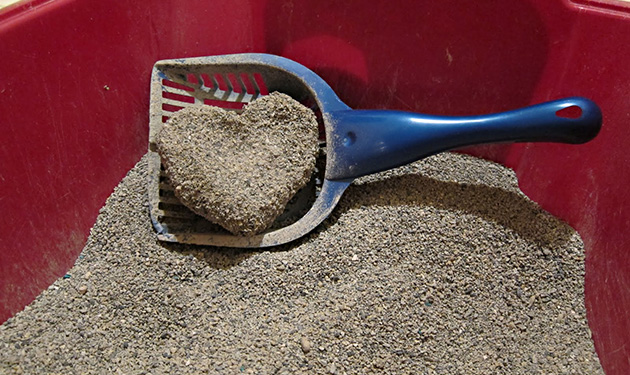 cat_litter_heart