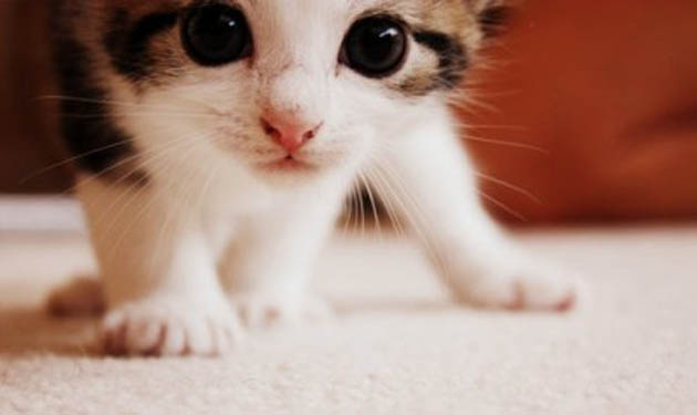 Funny Grumpy Cat Movie Memes