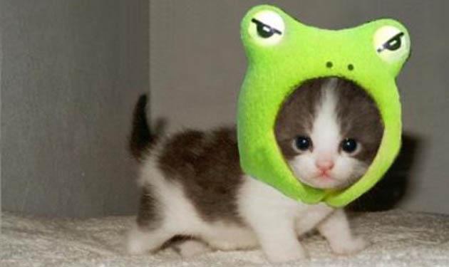 froggie kittie