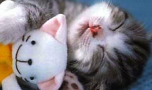 napping kitty doll