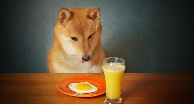can-dogs-eat-cooked-eggs_baa4e77d6bde704