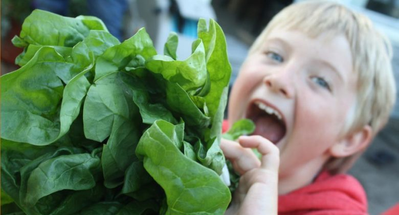 kaiden-spinach-cropped