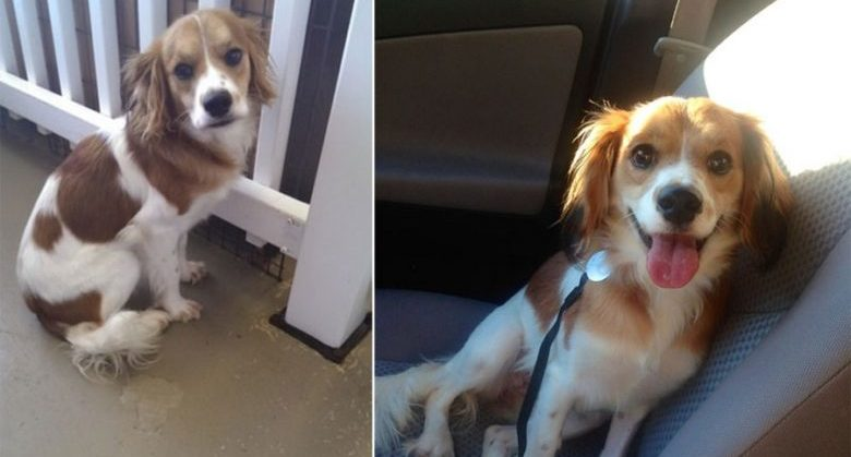 the-faces-of-dogs-before-and-after-adoption-15